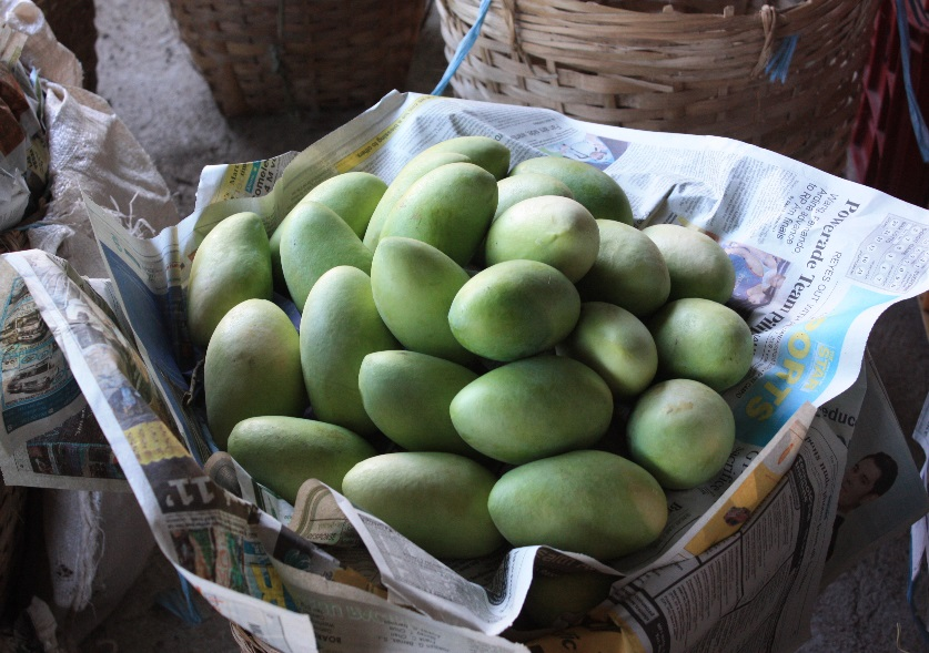 A basket full of quality mangoes (Photo by Allan B. Siano)