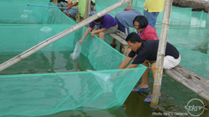 Applying S&T for the improvement of the mangrove crab industry 2